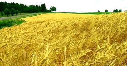 Резултат с изображение за сащ земеделие